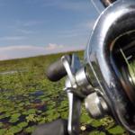 Cómo pescar black bass en coberturas extremas - EsPesca (1)