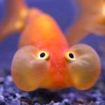 Cuales son los órganos sensoriales de los peces - Todo para la pesca (1)