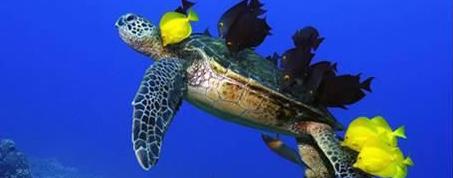 Cuales son los órganos sensoriales de los peces - Todo para la pesca (3)