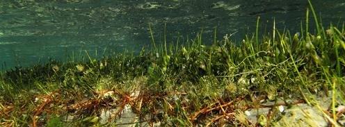 Cuales son los fondos litorales con mayor interés para la pesca deportiva - Todo para la pesca (1)