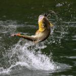 la-pesca-de-la-lubina-para-principiantes-espesca-2