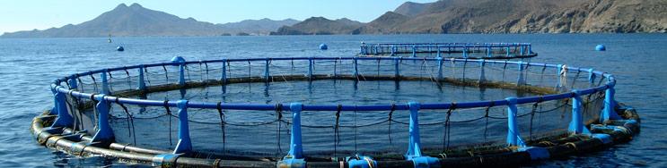 La sobre explotación pesquera y acuicultura sostenible