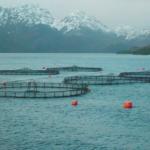 la-sobre-explotacion-pesquera-y-acuicultura-sostenible-espesca-2