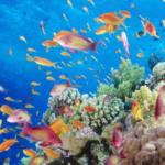 las-50-mejores-infografias-de-peces-del-mundo-espesca