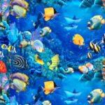 +1000 Fotos de peces, imágenes y fotografías para conocer a todo tipo de peces
