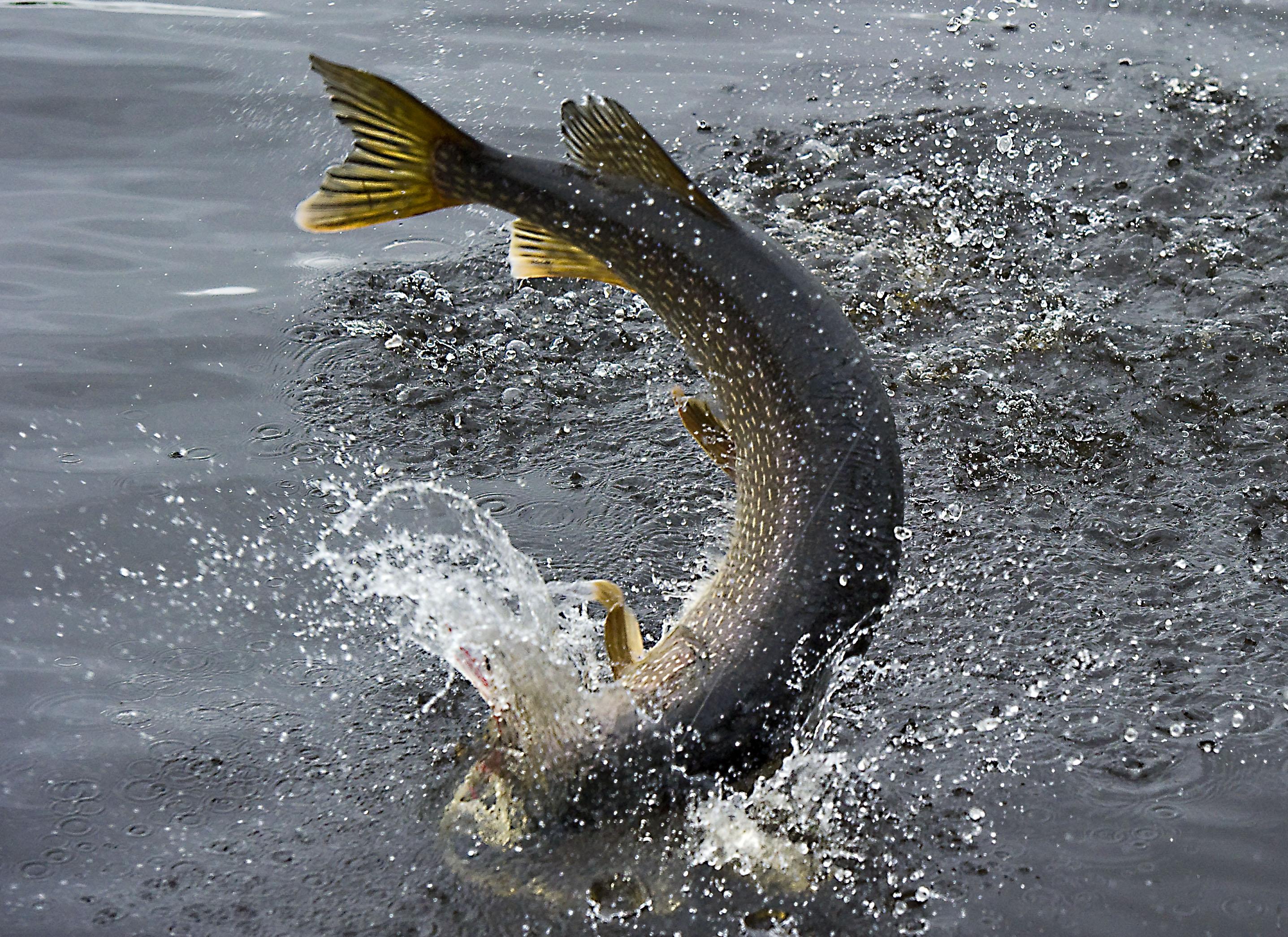 Pescar en Otoño, 5 especies que podrás capturar en esta época del año