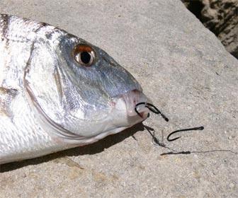 Anzuelos para pesca de herreras