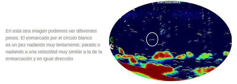 Bancos de peces reflejados por ondas sonda de pesca