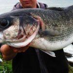 ¿Cómo pescar lubinas o lobinas? Conviértete en un gran cazador de este magnífico pez