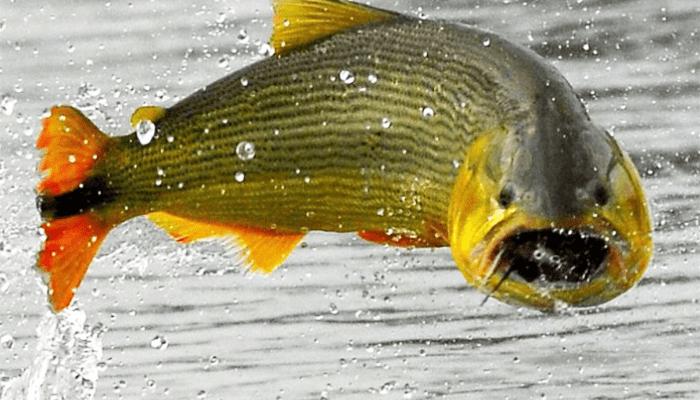 Como saber la edad de los peces calcula bien espesca - Los peces traen mala suerte ...