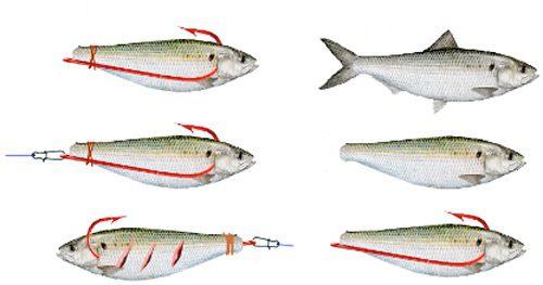 Distintas formas de anzuelar una sardina