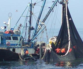Pesca industrial  o comercial