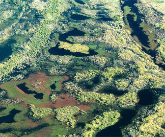 El Delta del Paraná para la pesca de tarariras