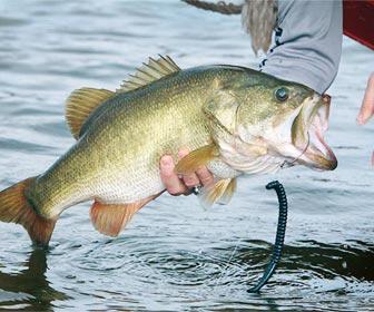 El arte de la pesca del bass