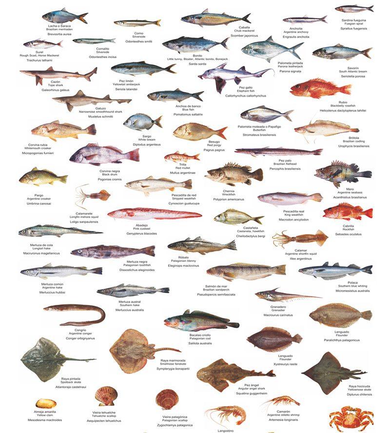 Especies de peces en Argentina