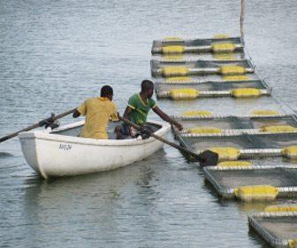 FAO situacion sector pesquero mundial