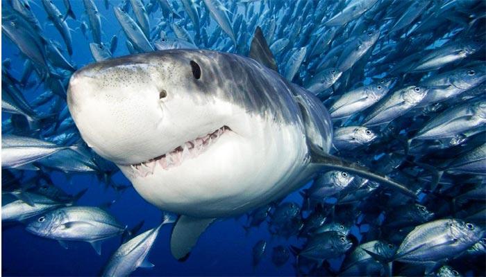 Peces mas grandes del planeta