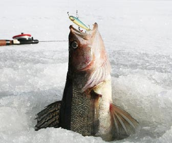Grandes capturas en el ice fishing