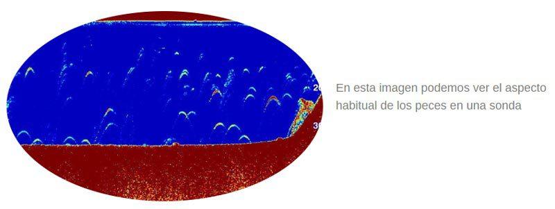 Imagen interpretacion habitual peces con sonda
