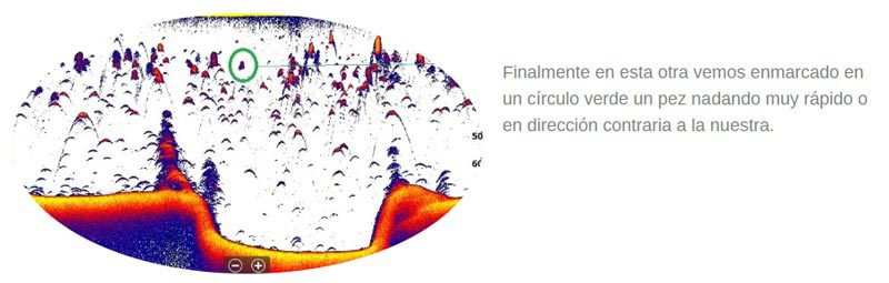 Imagen peces direccion contraria ondas sonda de pesca