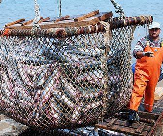 Industria del sector pesquero