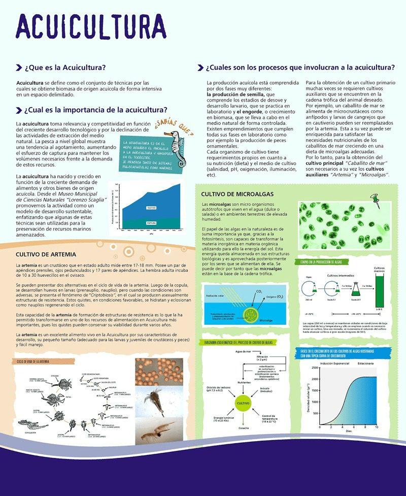 Infografía sobre la acuicultura