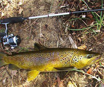 La pesca de la trucha comun