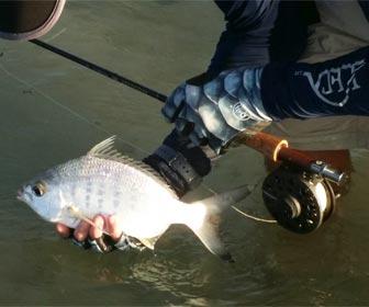 La pesca de mojarras en mar y rio