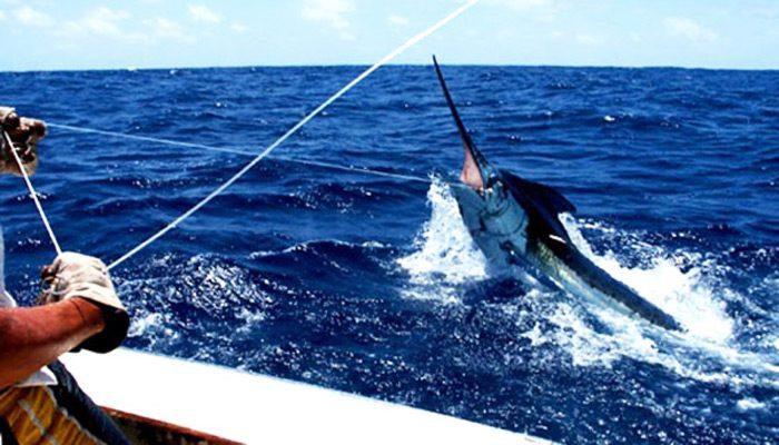 Pesca En Canarias Mejores Lugares Para Ir A Pescar Espesca