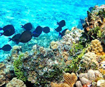 La pesca en zonas con arrecifes