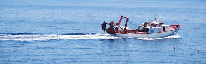 La pesca maritima trucos y consejos