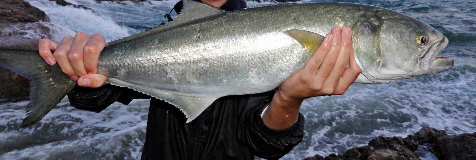 Las 5 mejores especies de peces para pescar en verano - Todo para la pesca (2)