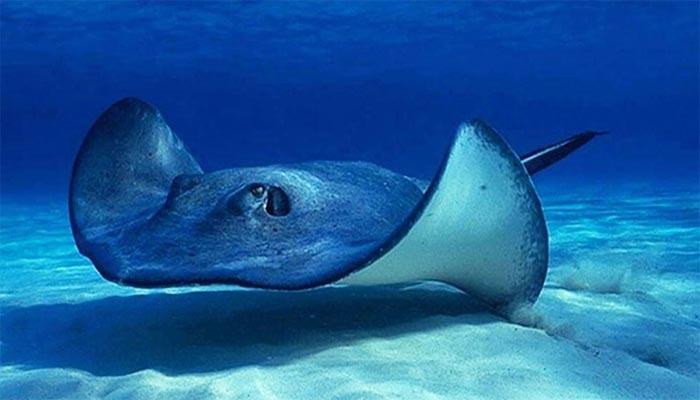 Animales más grandes del mar