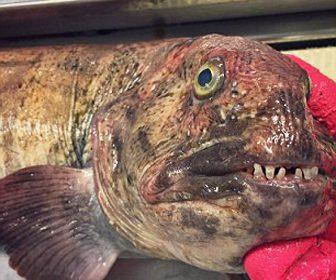 Monstruos de mar y criaturas extrañas
