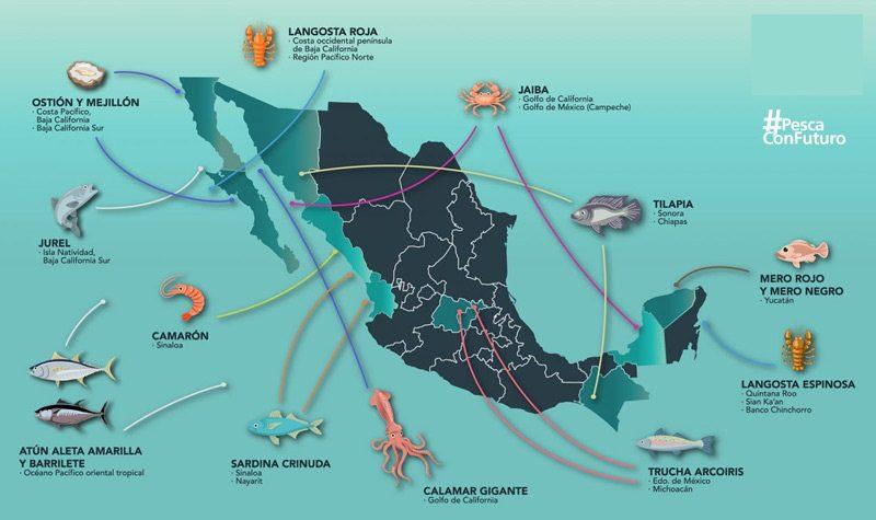 Mejores especies para pescar en Mexico y donde