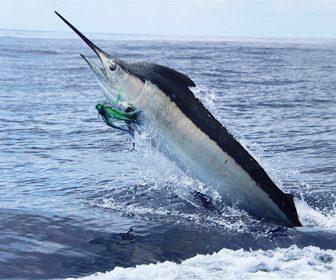Mejores lugares para pescar el MArlin gigante
