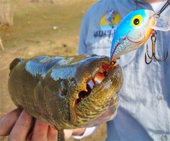 Mejores señuelos para pescar tarariras
