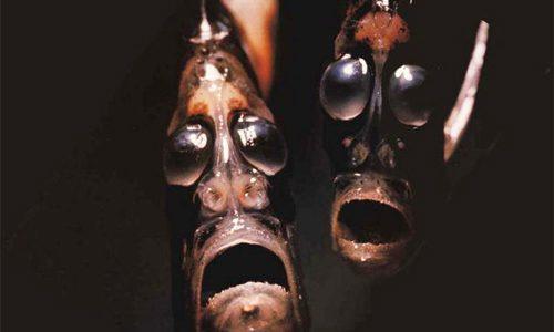 Monstruo marino Pez Hacha