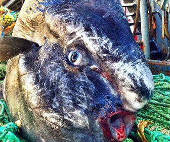Monstruos y criaturas extrañas del mar