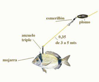 Tipos de aparejos montados para pescar al vivo con carnada fresca
