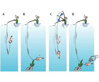 Movimiento de la caña pesca del calamar