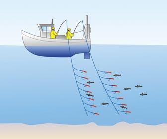 Pesca al curri desde embarcación