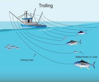 Pesca al currican de fondo