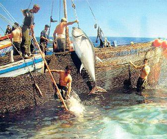 Pesca artesanal del atun rojo almadraba