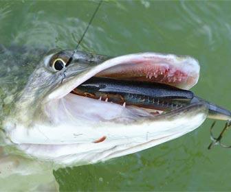 Pesca de lucios con señuelos