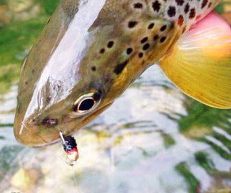 Pesca de truchas con ninfa