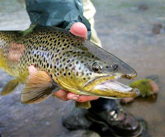 Pesca de truchas en Islandia