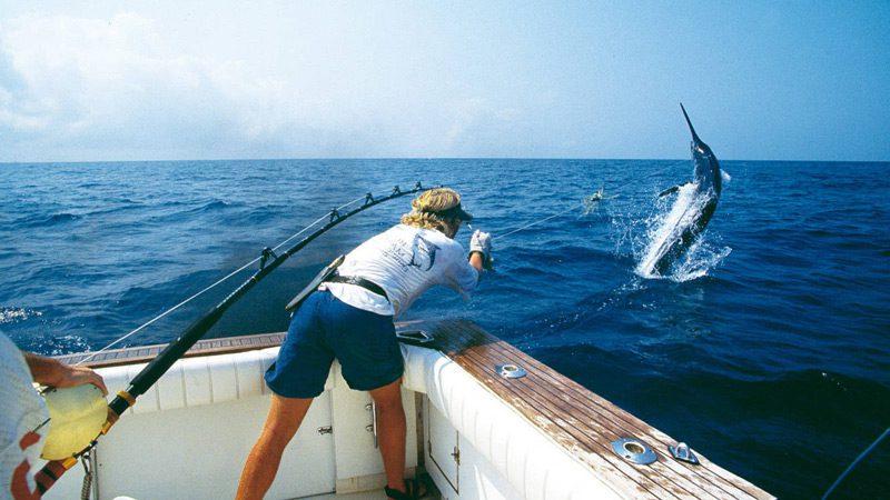 Pesca del Marlin azul al currican