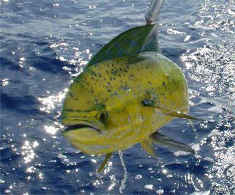 Pesca deportiva en Mexico