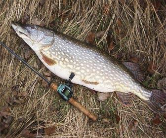 Pesca depredadores al lanzado lucios